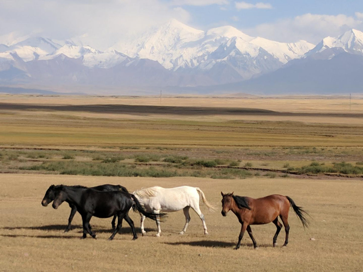 These are horses next to the beautiful high peaks of the Alay Valley, southern Kyrgyzstan. Credit: William Taylor