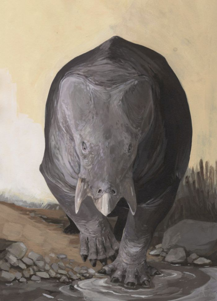 Artistic reconstruction of Lisowicia bojani, dicynodont, whose remains were found in Silesia. Fig. Karolina Suchan-Okulska