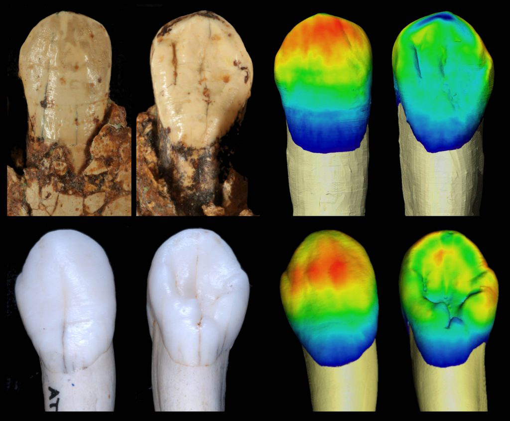 Fossil teeth/García Campos et al.