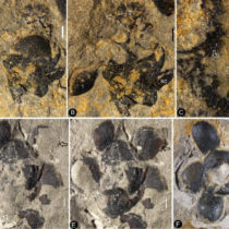 Flowers originated 50 million years earlier than previously thought