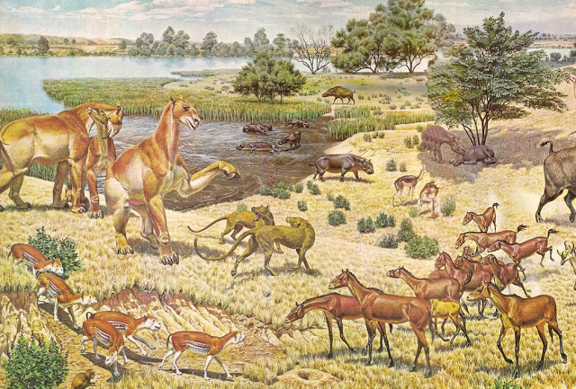 Illustrator Jay H. Matternes captured a scene from the Miocene Period as an ancient species of horse  called Parahippus, lower right, interacts with other carnivores and herbivores of the time. Credit: Jay H. Matternes/U.S. Department of the Interior/WikiCommons.