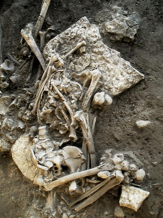 Some of the remains examined. Credit: Karl-Göran Sjögren/ University of Gothenburg