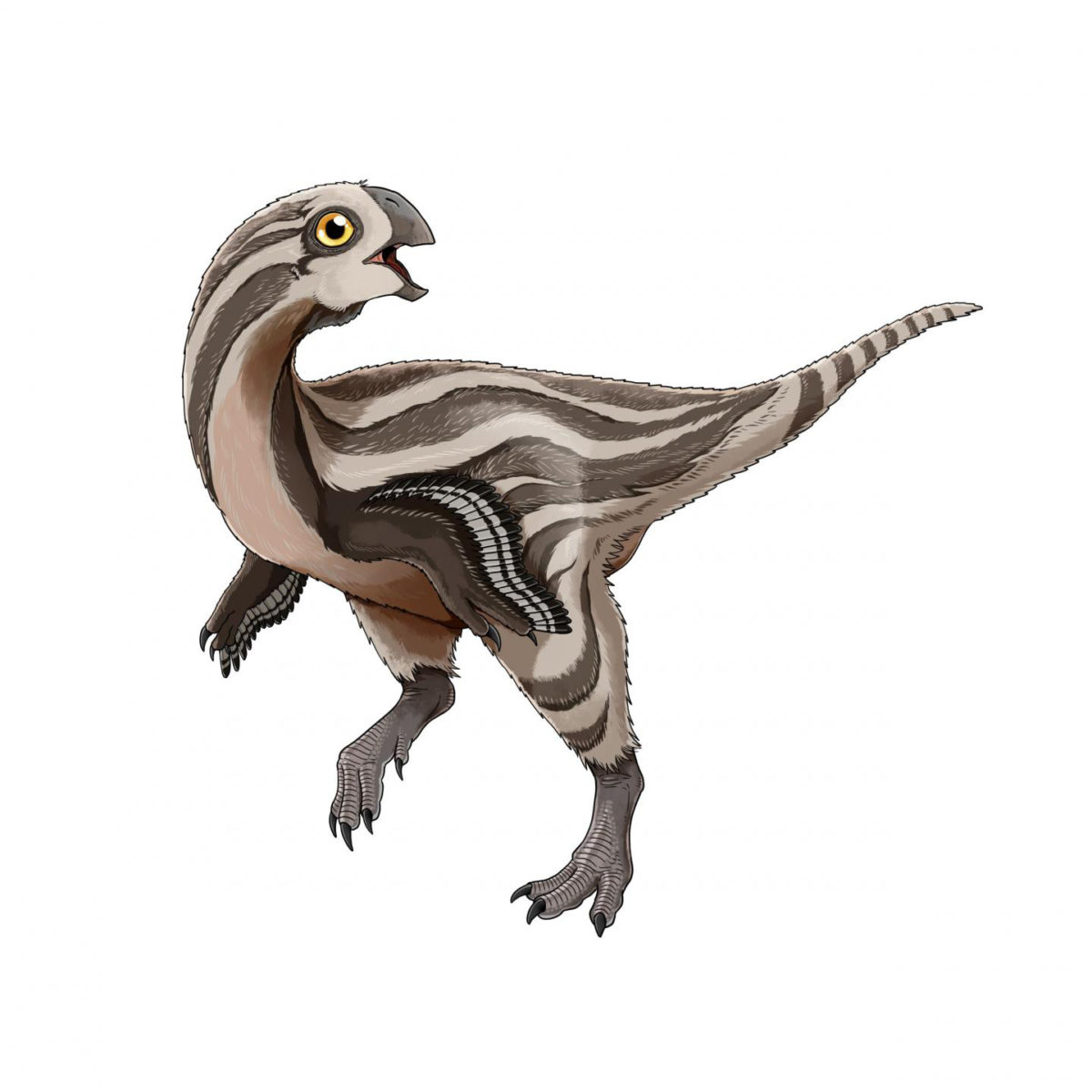 This is a Gobiraptor reconstruction. Credit: Do Yoon Kim (2019)