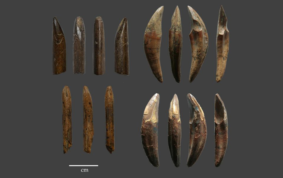 This is an example of tools manufactured from monkey bones and teeth recovered from the Late Pleistocene layers of Fa Hien Cave, Sri Lanka. Credit : N. Amano