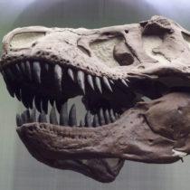 T. rex: Flexible Head