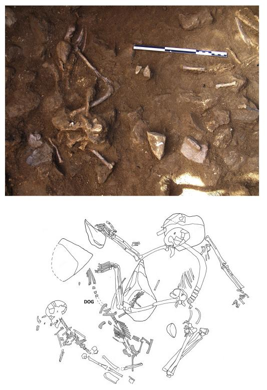 Top: remains of adult dog in partial anatomical connection in La Serreta. Bottom: dog in anatomical connection between human skeletons, in the necropolis Bòbila Madurell. Credit: UB-UAB