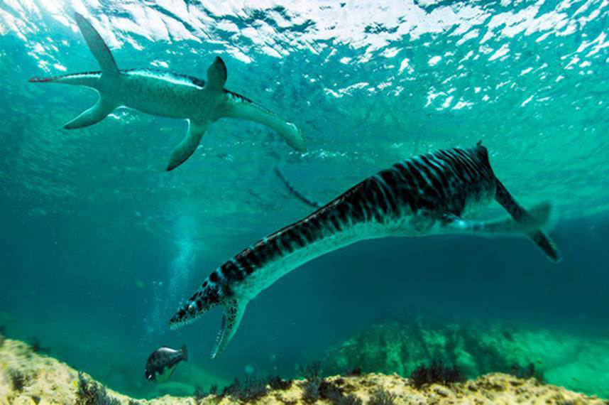 The leptocleididae, whose remains have been found for the first time on the Iberian Peninsula, were smaller plesiosaurs with shorter necks living in shallow waters. / José Antonio Peñas
