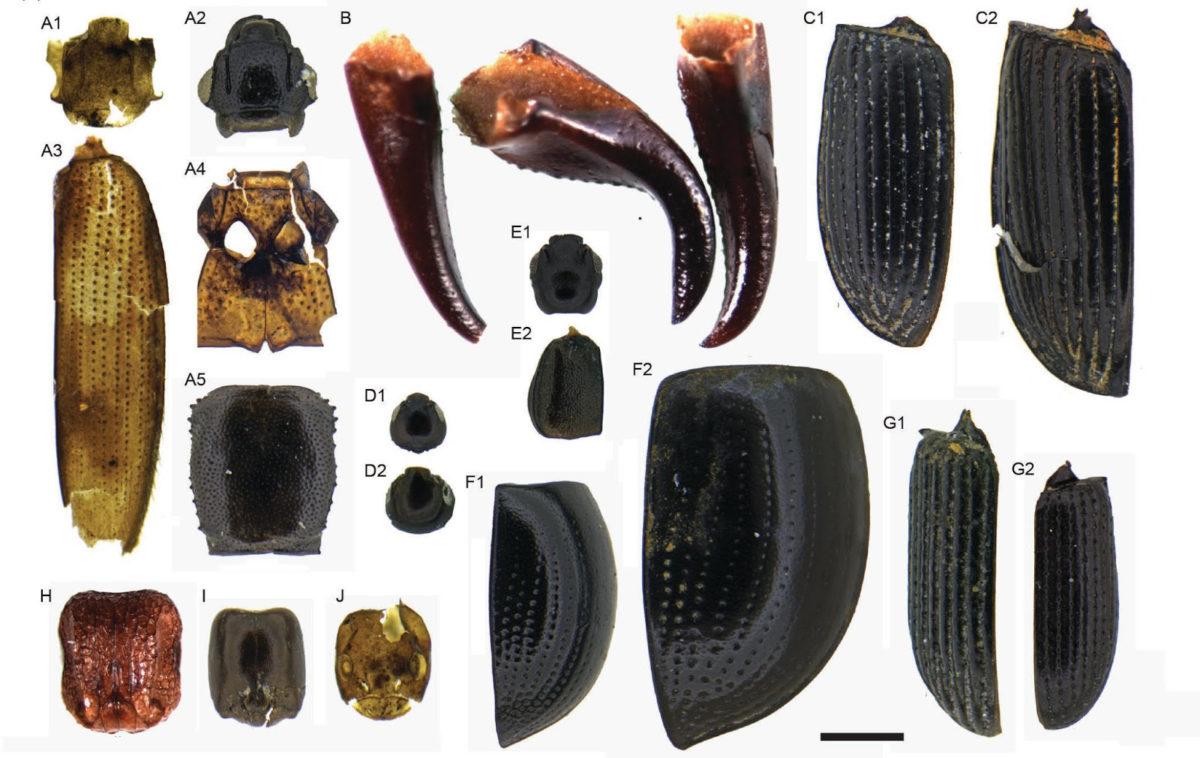Photomicrographs of the invertebrate fossil taxa. Credit: Nicholas Porch and Matthew Prebble]