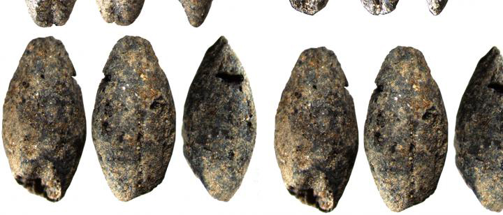 Researchers determined the age of millennia-old barley grains using radiocarbon dating. Credit: Santeri Vanhanen, CC-BY 4.0 licence