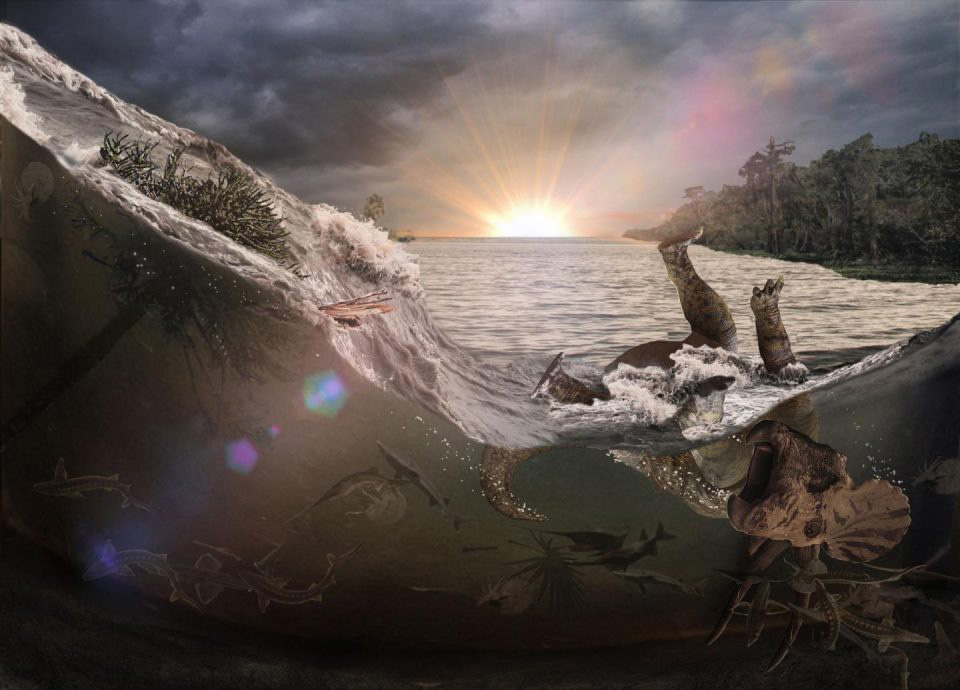 A meteor impact 66 million years ago generated a tsunami-like wave in an inland sea that killed and buried fish, mammals, insects and a dinosaur (Triceratops), the first victims of a cataclysm that led to Earth's last mass extinction. Graphic courtesy of Robert DePalma.