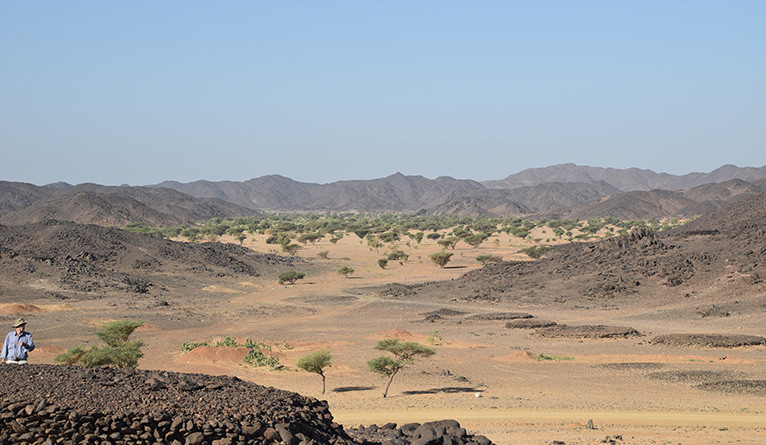 The team of archaeologists — led by Julien Cooper, a postdoctoral research associate in Yale's Department  of Near Eastern Languages & Civilizations — were intrigued at the sight of trees in the desert. Credit: Yale University