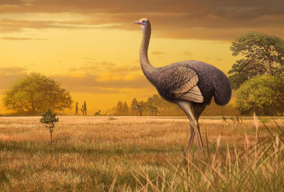 PaleoArt of the bird discovered in a Crimean cave. Credit: Andrey Atuchin
