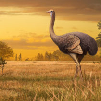 Bird three times larger than ostrich discovered in Crimean cave