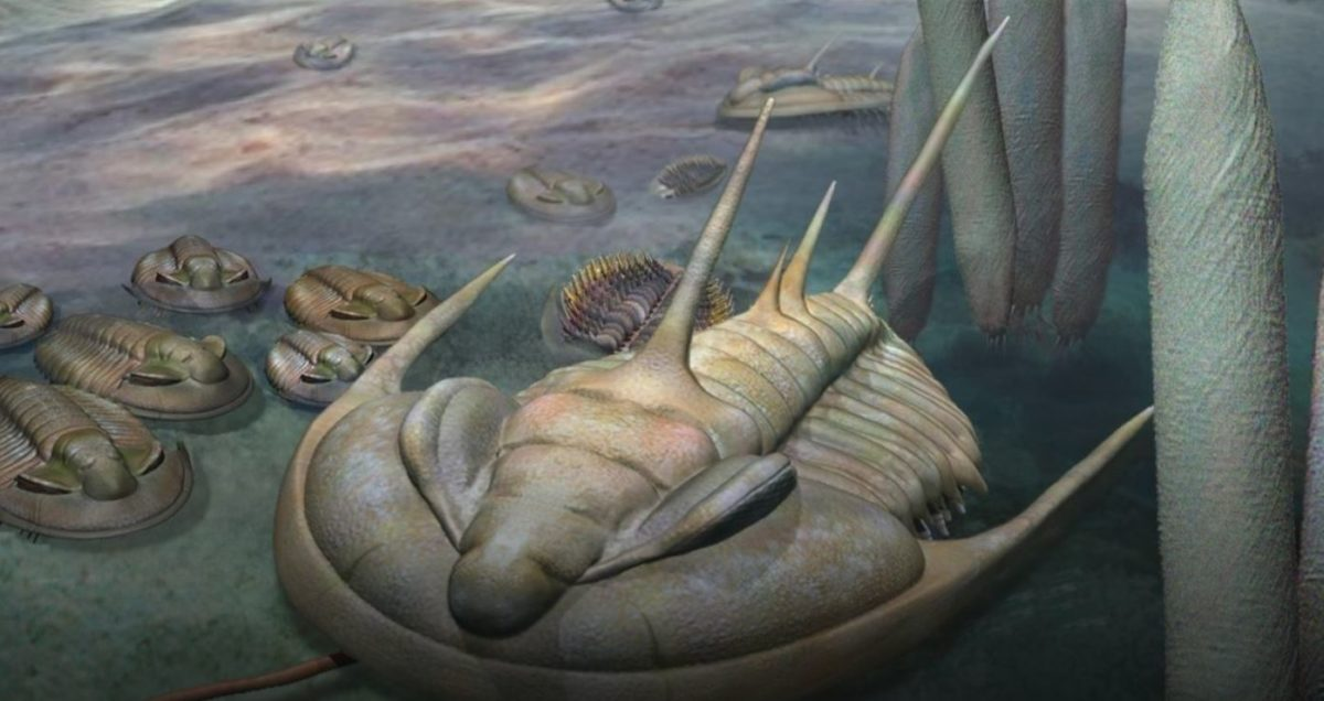 Artists impression of a Redlichia trilobite on the Cambrian seafloor. Credit: Artwork by Katrina Kenny