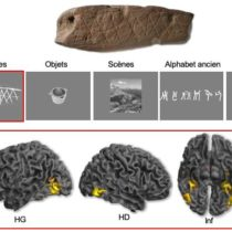 Neurosciences unlock the secret of the first abstract engravings