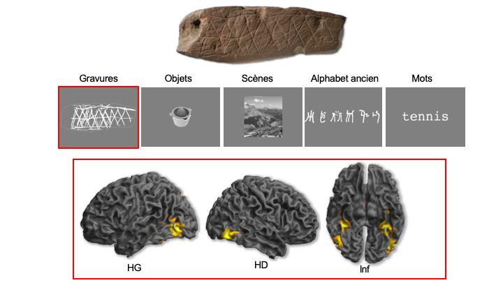 Top: Engraving discovered at the Blombos site (South Africa) dating back 75,000 years before the present. Center: Example of visual categories used in the experiment. Bottom: Lateral and inferior views of brain activations caused by the perception of engravings located in the occipital lobe and the ventral part of the temporal lobe (LH: left hemisphere, RH: right hemisphere, Inf: inferior view). These activations are comparable to those caused by the perception of everyday objects. Credit: Emmanuel Mellet & Francesco d'Errico