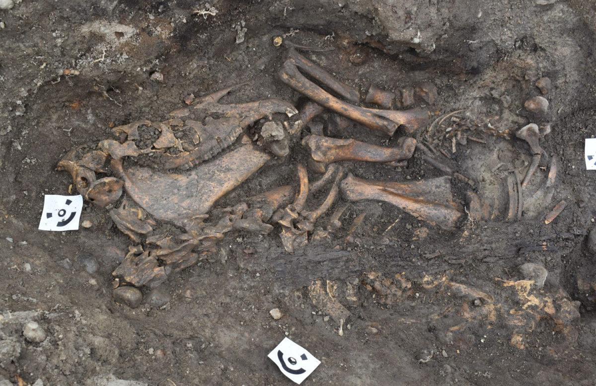Detail of horse skeleton.  Photo Credit: Arkeologerna Statens Historika Museer/The History Blog.