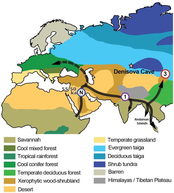 A map showing where the ancestors of modern humans appear to have met and mixed  with archaic hominins. Credit: University of Adelaide