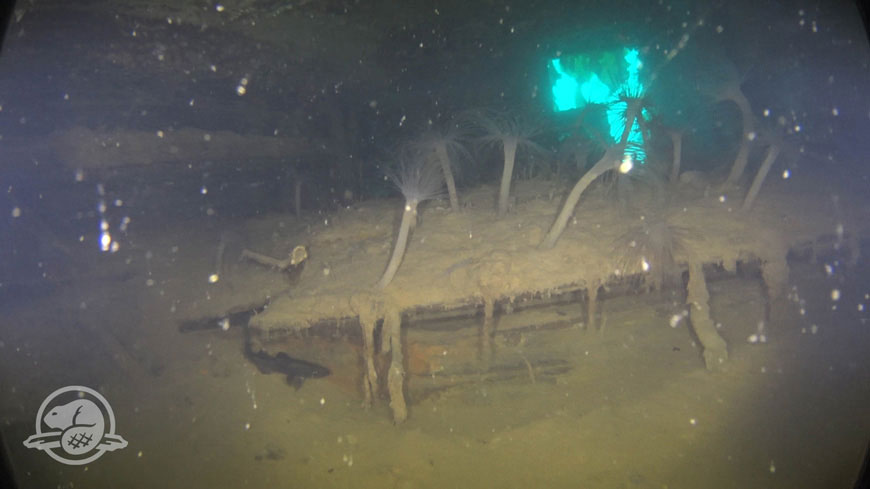 A storage compartment in Captain Crozier's cabin, partly covered by silt and marine life (sea anemones), with one of the cabin's stern gallery windows clearly visible in the background. Photo Credit: Parks Canada, Underwater Archaeology Team.