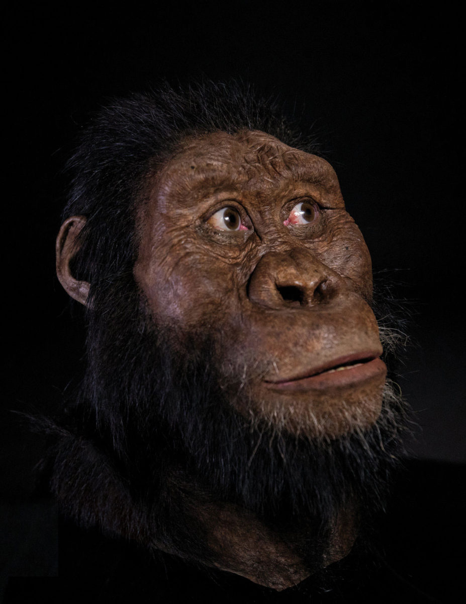 The facial reconstruction of MRD by John Gurche was made possible through generous contribution by Susan and George Klein. Image Credit: Matt Crow/Cleveland Museum of Natural History/Max Planck Institute.