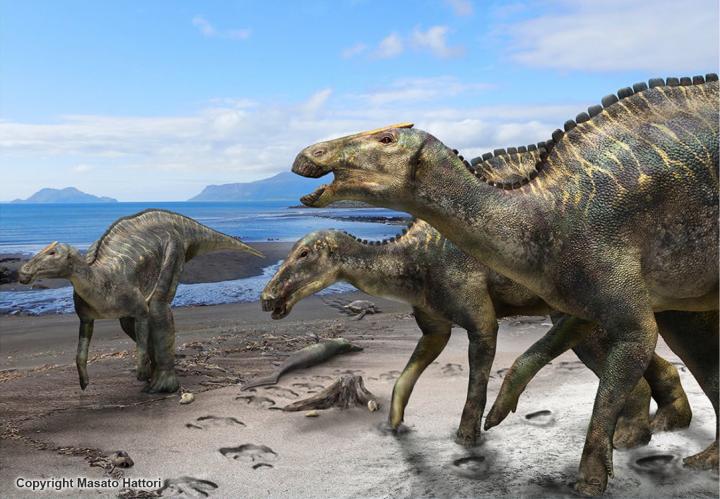 Reconstruction of Kamuysaurus japonicus. Credit: Kobayashi Y., et al, Scientific Reports, September 5, 2019