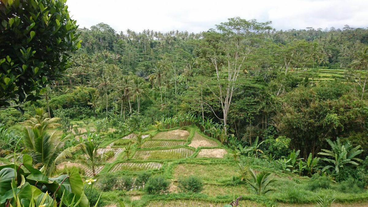 Human transformation of slopes for rice farming, Ubud, Bali. Credit: Andrea Kay
