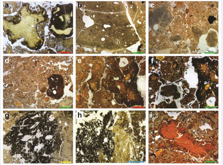 These are profiles of sediment showing a Denisova fossil poo gallery, including hyena, wolf and other unidentified. Credit: Dr. Mike Morley, Flinders University
