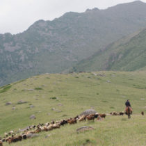 Livestock bones help date the earliest spread of millet grains outside China