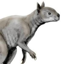 Giant kangaroos of Ice Age Australia had skulls built for powerful bites