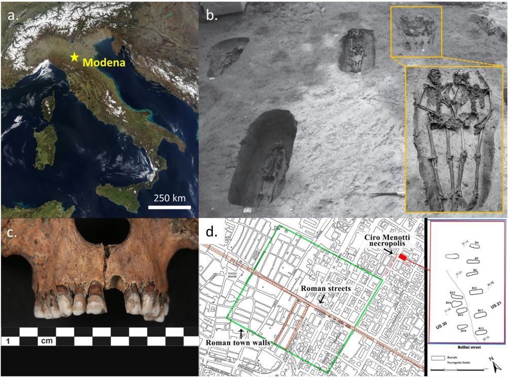 a) Map of Italy with Modena (credits to Jacques Descloitres, MODIS Rapid Response Team, NASA/GSFC); (b)  Ciro Menotti necropolis; the 'Lovers of Modena' are depicted within the inset; (c) Teeth and maxilla of individual 7_CM13; (d) Roman town of Mutina (Latin name of Modena) with the necropolis plan.