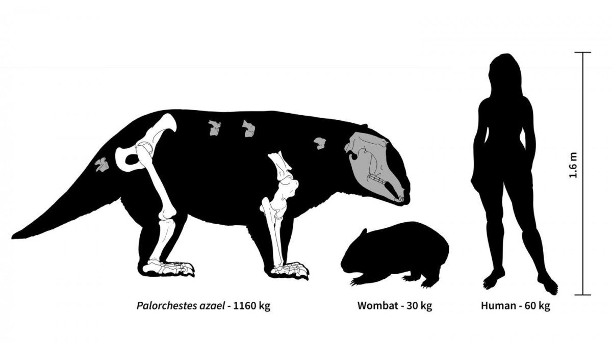 Ancient Australia was home to strange marsupial giants, some weighing over 1,000 kg. Credit: Hazel Richards (2019)
