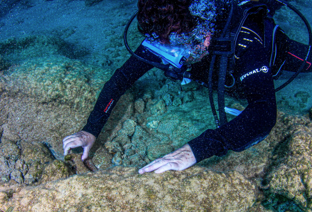 The excavation head Dr Angeliki G. Simosi examines antiquities on the Antikythera seabed during the October 2019 research period (photo: MOCAS).