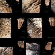 Prehistoric humans ate bone marrow like canned soup 400,000 years ago