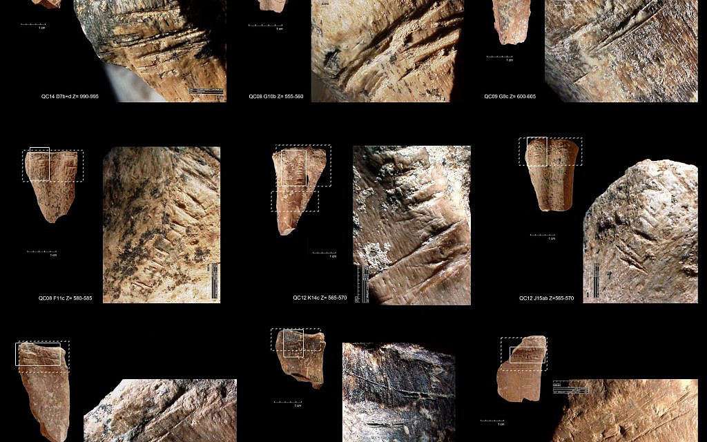 420,000- to 200,000-year-old chop marks, cortical scars and chipped marks on the anterior and posterior surface of metapodial shafts from Qesem Cave. (Dr. Ruth Blasco)