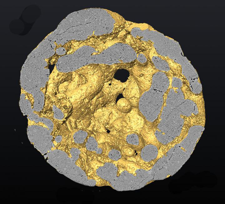 Three-dimensional reconstruction of a Caveasphaera specimen, showing cell structures. Credit: NIGPAS