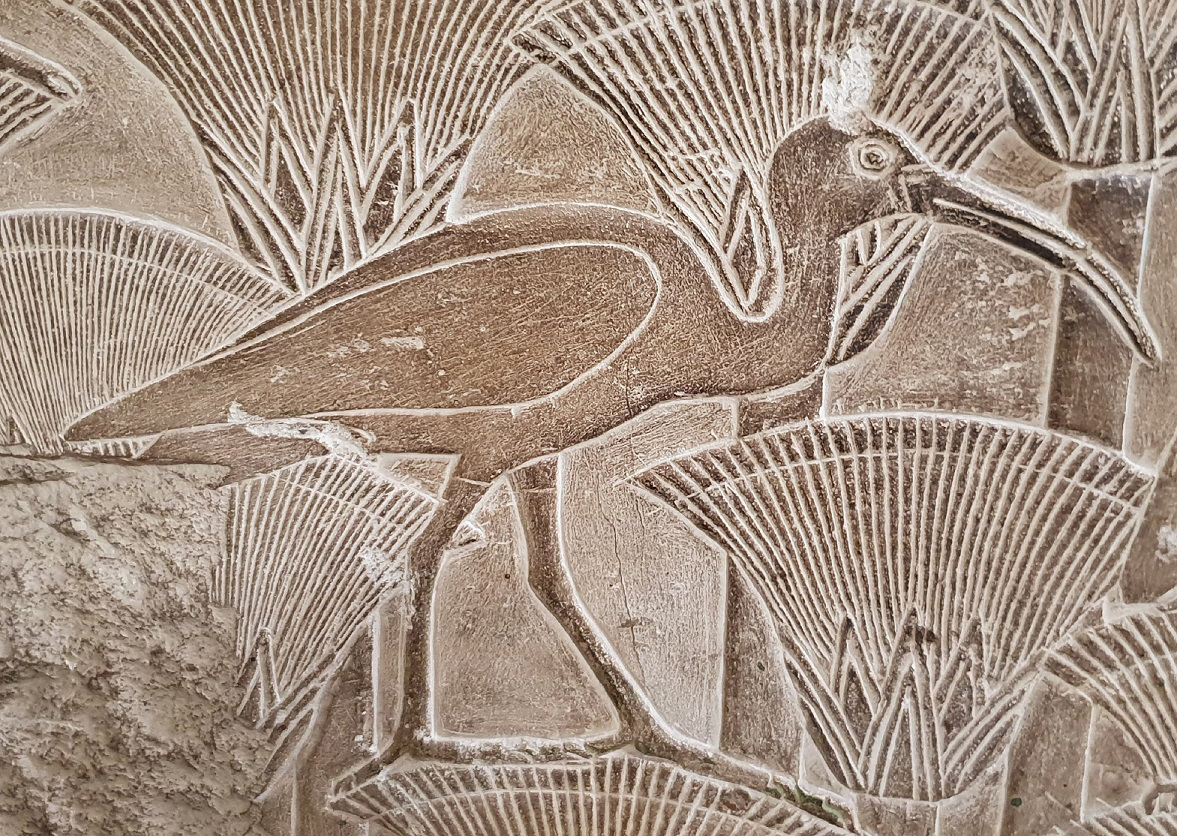 The ibises were mummified and placed in clay jars by temple priests then offered to Thoth who had the appearance of a man but the head of an ibis. The mummies were stacked floor-to-ceiling in many rooms lining the catacomb streets.