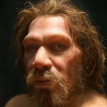 Inbreeding and population/demographic shifts could have led to Neanderthal extinction