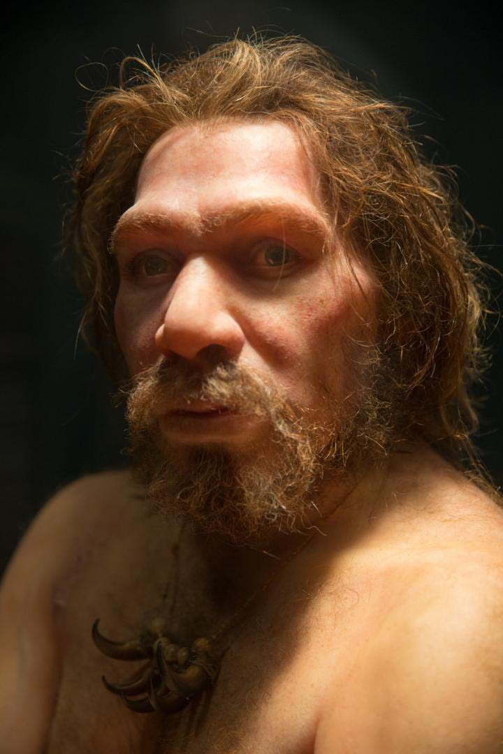 Small populations, inbreeding, and random demographic fluctuations could have been enough to cause Neanderthal extinction, according to a study published November 27, 2019 in the open-access journal PLOS ONE by Krist Vaesen from Eindhoven University of Technology, the Netherlands, and colleagues. Credit: Petr Kratochvil (CC0)