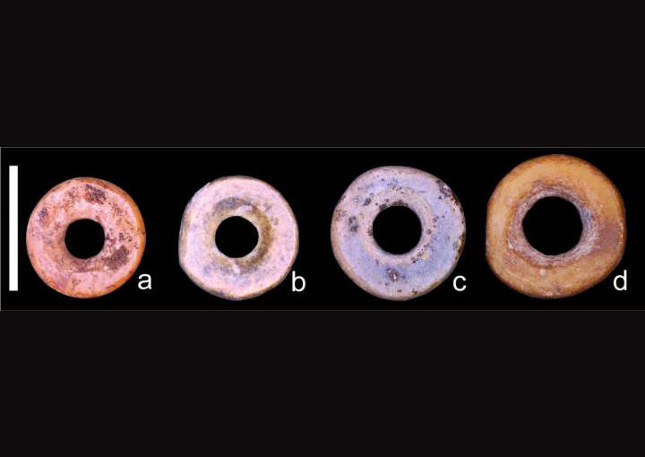 Examples of OES beads showing subtle size differences between regions. Scale bar = 5 mm; (a) Nelson Bay Cave, South Africa; (b) Wonderwerk Cave, South Africa; (c) Magubike Rockshelter, Tanzania; (d) Daumboy 3 Rockshelter, Tanzania. Credit: Miller et al, 2019