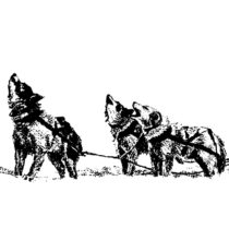 Unique sledge dogs helped the Inuit thrive in the North American Arctic