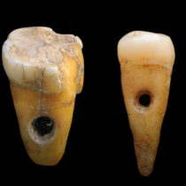 Human teeth used as jewellery in Turkey 8,500 years ago