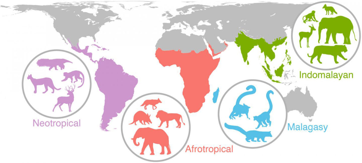 Researchers have discovered that events from 20,000 years ago or more are still impacting the diversity and distribution of mammal species worldwide. It took almost five years to create and analyze the study's data, which includes information about the diets, body sizes and variety of species in 515 mammal communities from Africa, Asia, Madagascar and the Americas. Credit: Figure courtesy of John Rowan/UMass Amherst