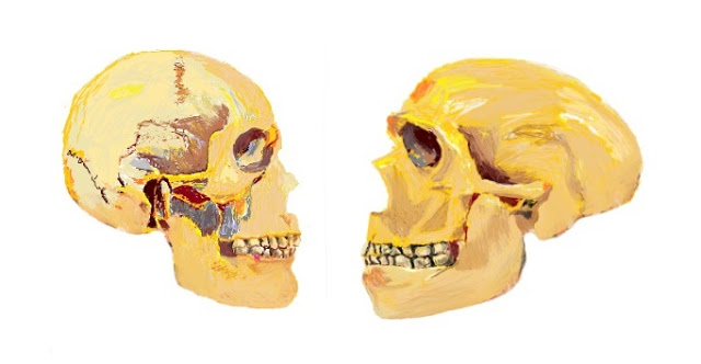 Research study from the University of Barcelona identified a genetic network involved in the unique evolutionary trajectory of the modern human face and prosociality not found in Neanderthals. Credit: Thomas Ôrourke/UB
