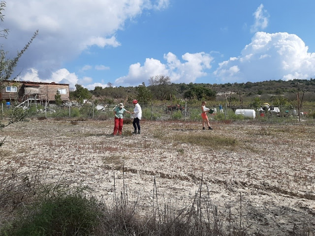View of the site at Amargeti, Cyprus. Credit: Dept. of Antiquities, Republic of Cyprus