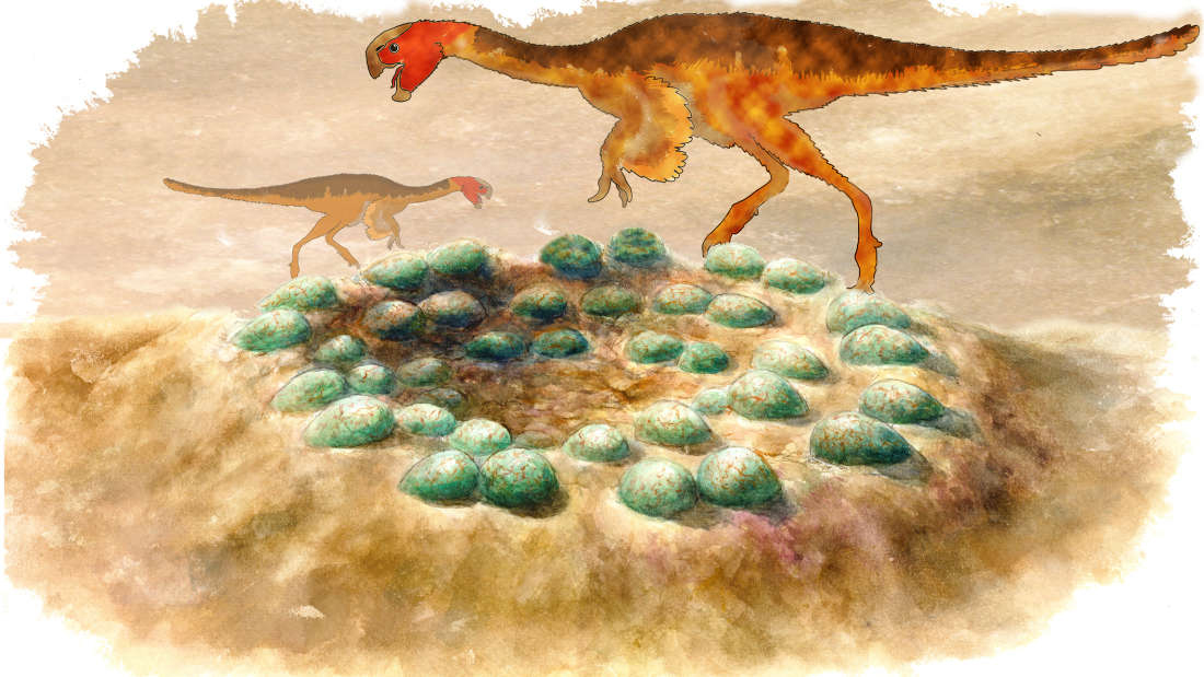 Reconstruction of a clutch of eggs with silhouettes of the oviraptorids. © Chien-Hsing Lee/Tzu-Ruei Yang/Thomas Engler