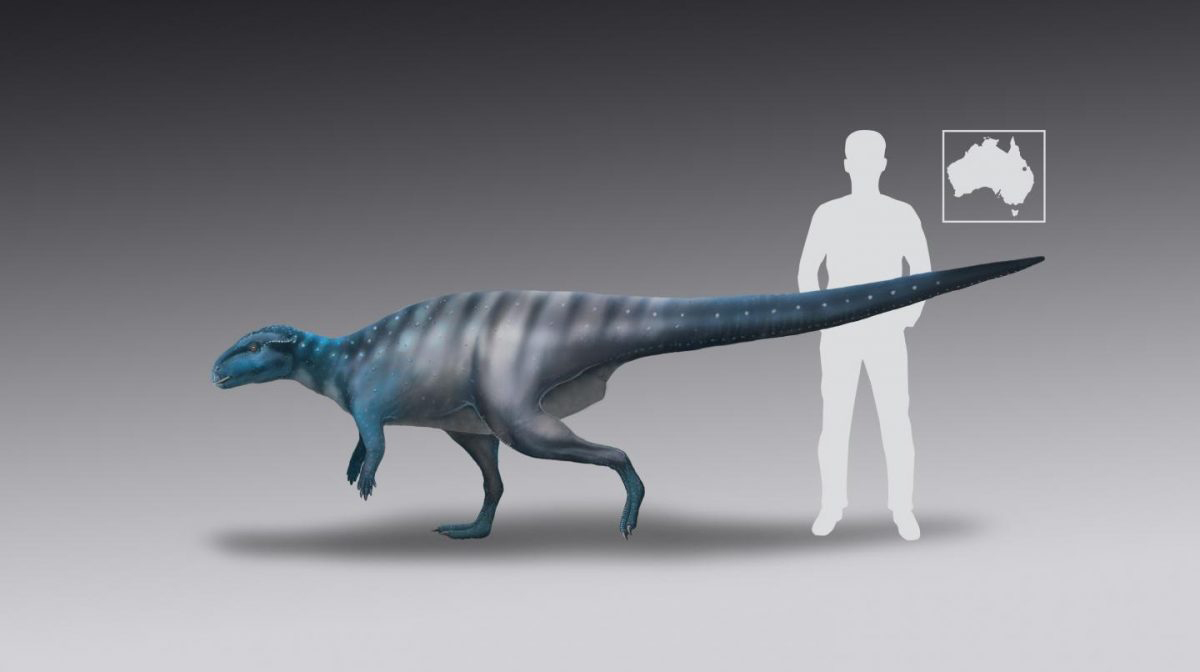 This is a life-reconstruction of the 200-million-year-old dinosaur track-maker from Mount Morgan. Credit: Dr Anthony Romilio