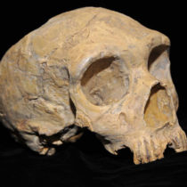 Earliest interbreeding event between ancient human populations discovered
