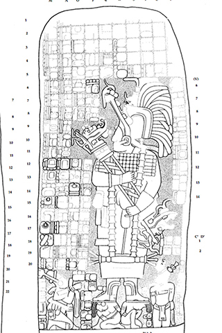 A drawing of a carving found on a stone monument in Cobá depicts the warrior queen who may have built the great, white road to expand her domain.