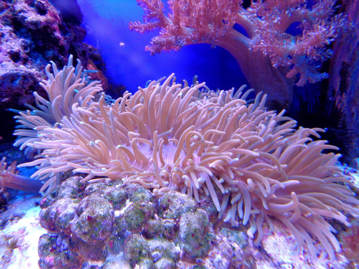 Long-standing human stressors including agricultural run-off and overfishing and more recent ocean warming from climate change have all contributed to large-scale coral reef die-offs. Credit: CC0 Public Domain