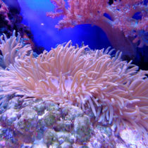 Coral reefs: Centuries of human impact